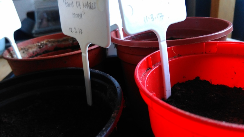 Pots of newly sown seeds.