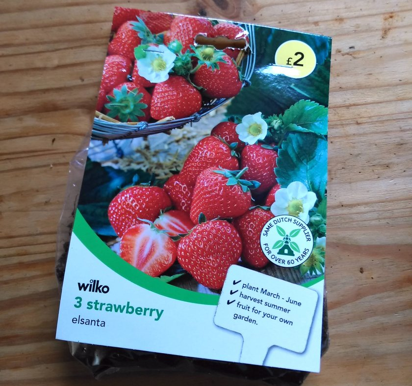 Bag of bare-root Strawberry Elsanta plants from Wilko.