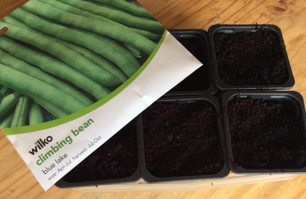 French Bean 'Blue Lake' seeds to sow