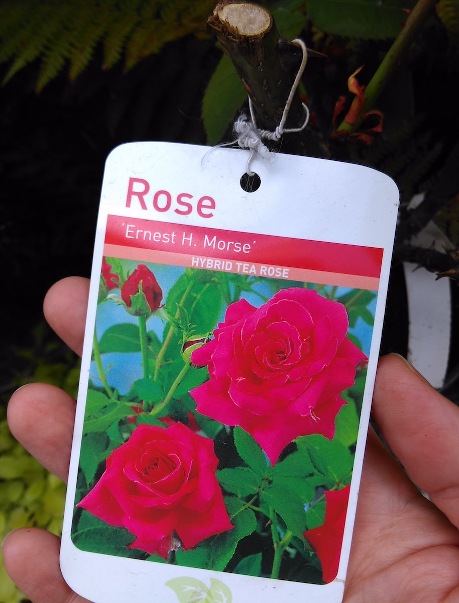Choosing the Roses for the new garden
