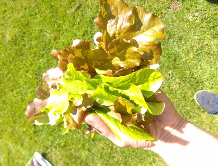 handful of mixed salad leaves