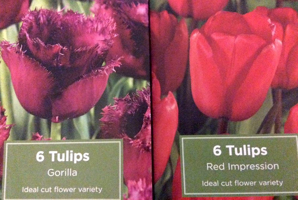 tulip gorilla and red impression packs