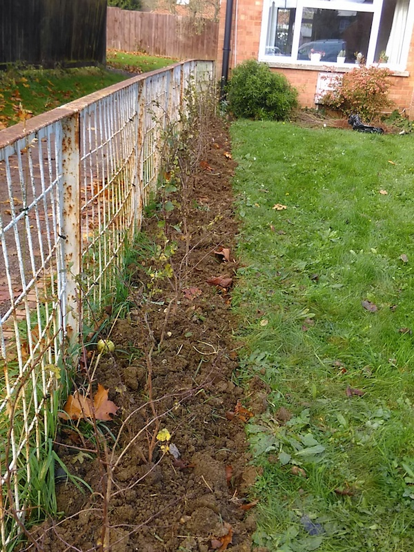 The hedge is of native species of Hawthorn and Blackthorn.