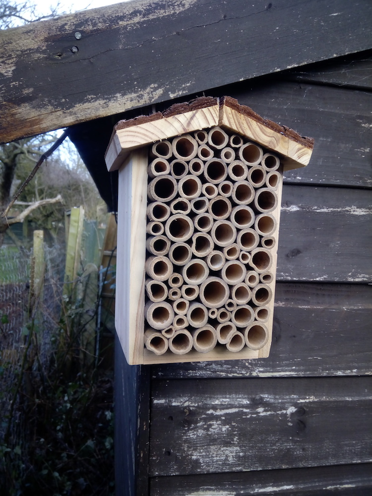 A bee hotel attached to my shed