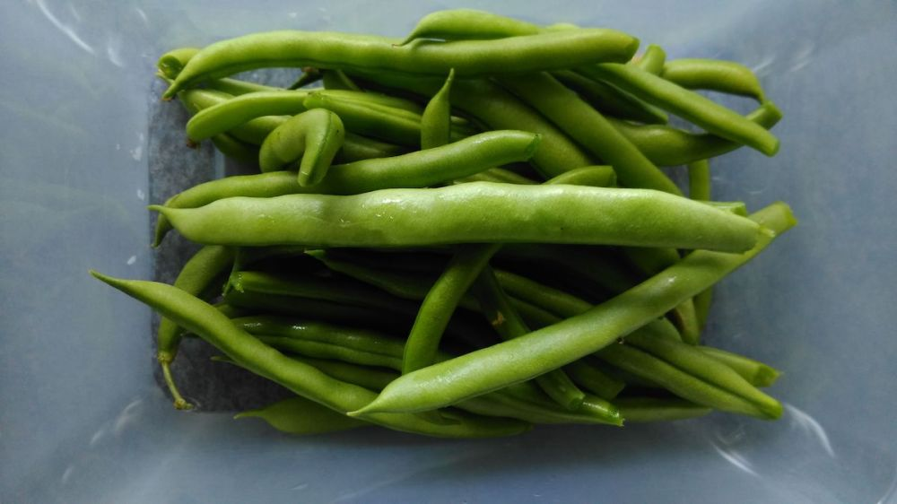 French Bean 'Blue Lake' beans