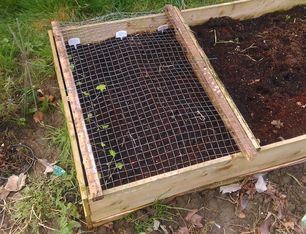 anti-cat frame on raised bed to protect from cats