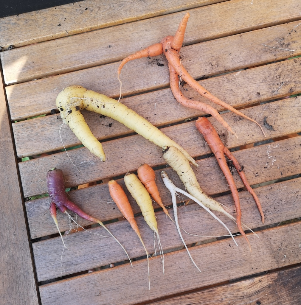 A range of colours and twisted shape carrots.